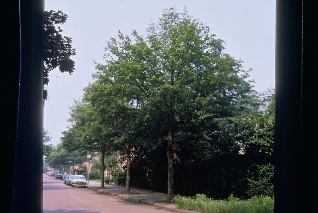 Maple Plantguide Fillpots Garden Centre Colchester Essex