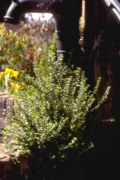 vaste planten gids